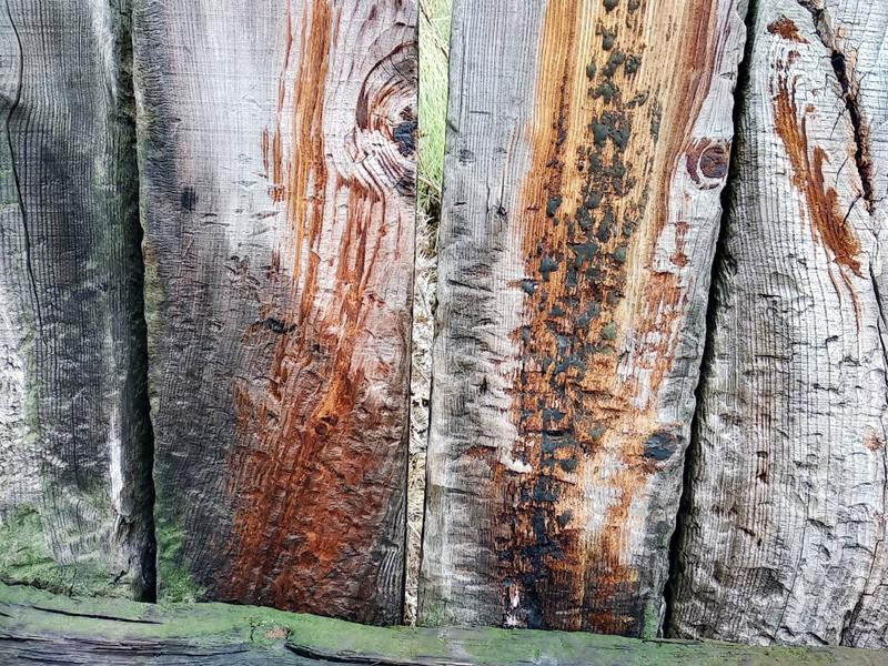 Background from a wooden board wooden boards with knots. Painted light brown rustic background of old wood stock image