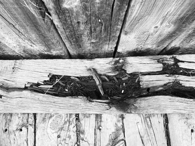 Background from a wooden board wooden boards with knots. in black and white. Old wooden painted light brown rustic background stock image