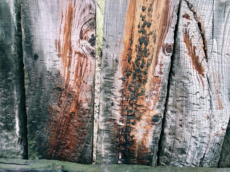 Background from a wooden board wooden boards with knots. Painted light brown rustic background of old wood royalty free stock photography
