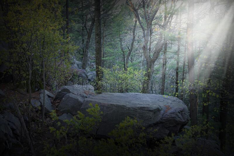 Background Woods, Forest, Rock Ledge stock photo