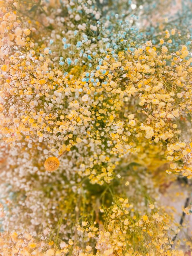 Background of yellow flower in summer stock images