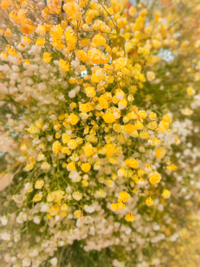 Background of yellow flower in summer royalty free stock photography