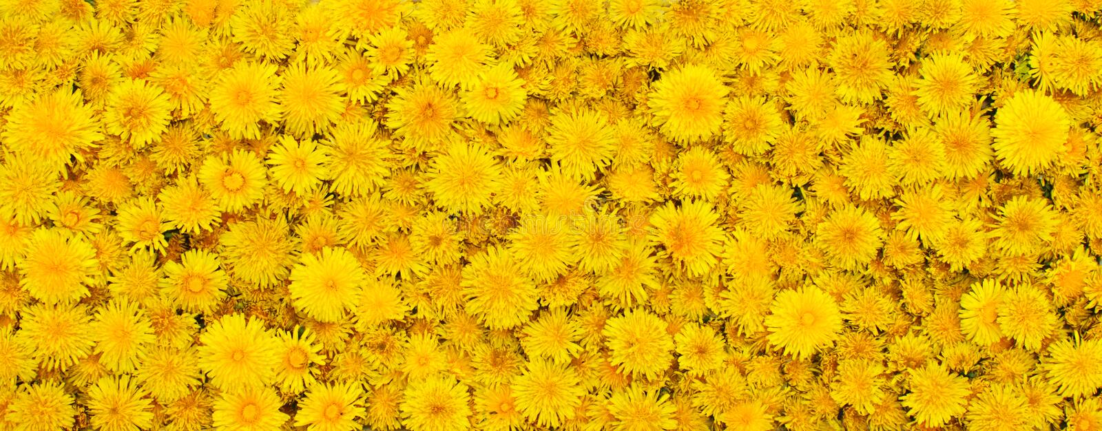 Background from yellow flowers stock images