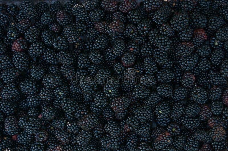 Download Backgrounds Of Blackberries Stock Image - Image: 10517573