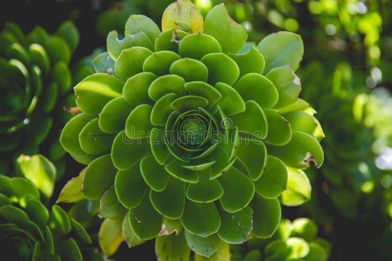 Backgrounds, Blur, Botanical stock photo