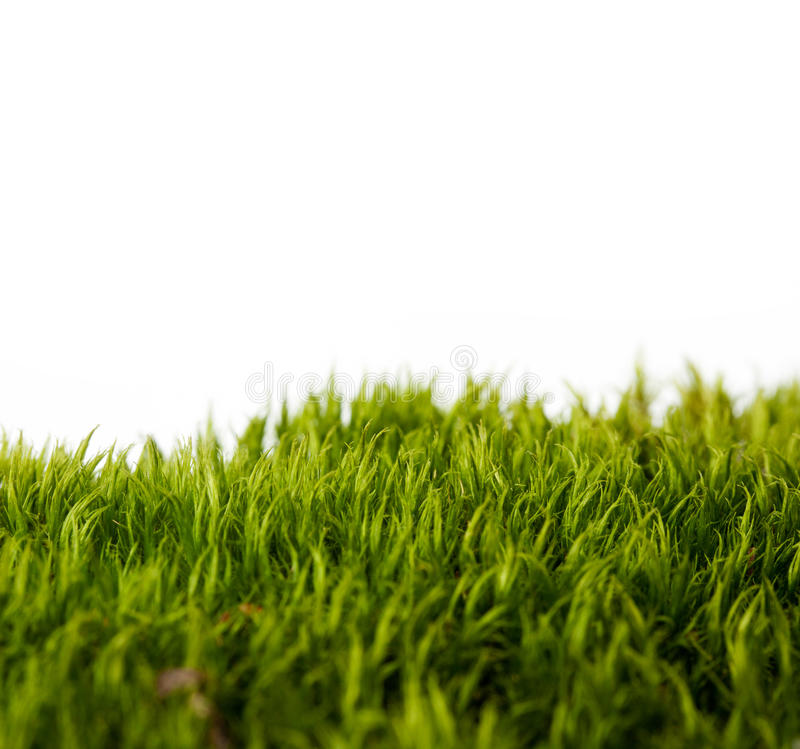 Download Backgrounds Of Fresh Spring Green Grass Stock Photo - Image: 21858414