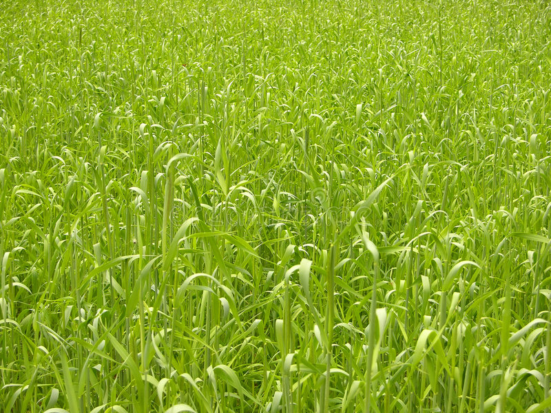 Backgrounds-grass royalty free stock images