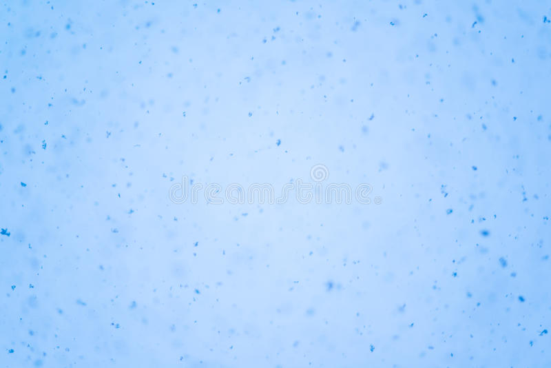 Backgrounds light blue. Snow flakes hovering down from sky royalty free stock image