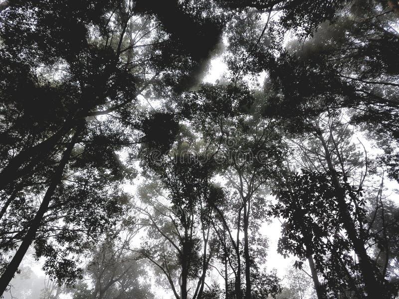 Backgroung de forêt photographie stock libre de droits