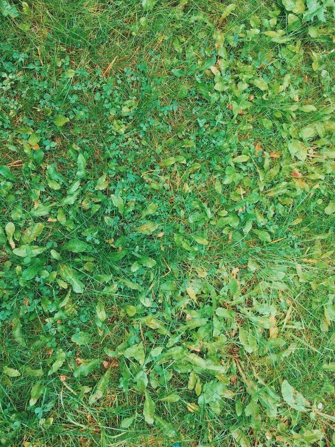 Backgroung de la hierba y de la hoja Textura de la hierba fotografía de archivo libre de regalías