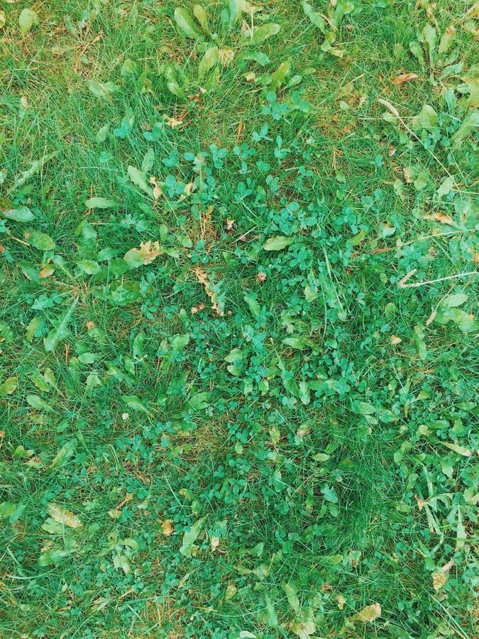 Backgroung de la hierba y de la hoja Textura de la hierba imágenes de archivo libres de regalías