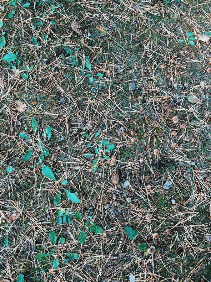 Backgroung de la hierba y de la hoja Textura de la hierba fotos de archivo