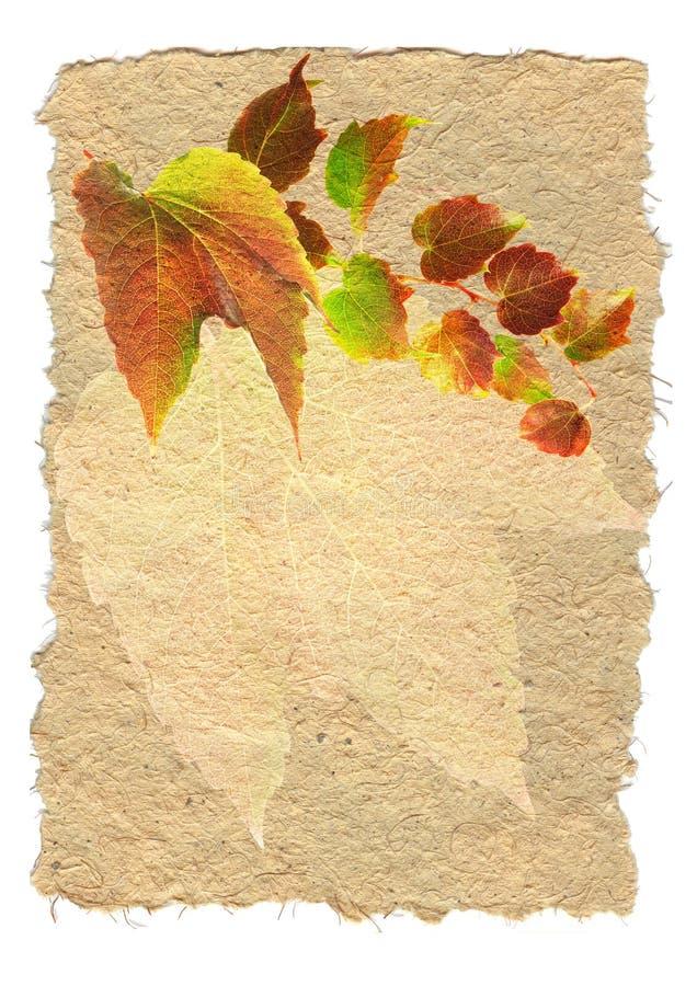 Backgruund com folhas coloridas fotos de stock royalty free