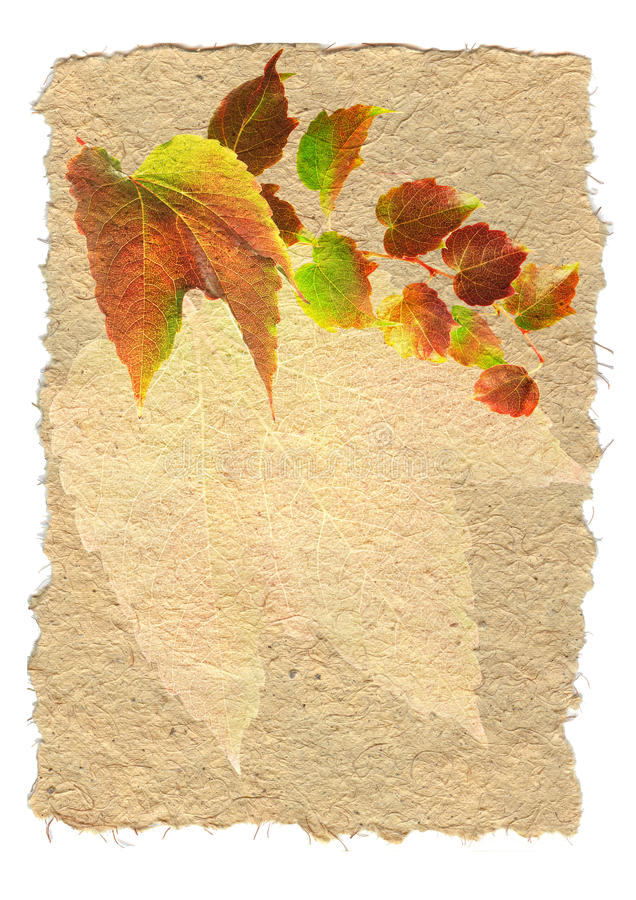 Free Backgruund With Colored Leaves Royalty Free Stock Photos - 10796918