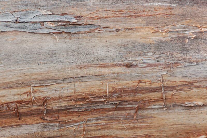 Backgtound en bois de Brown Texture détaillée photographie stock