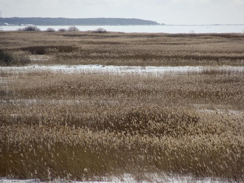 landscape on dry reed meadow stock photography