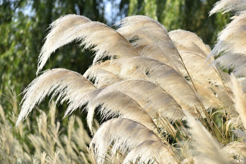 Backlight Reed стоковые изображения rf