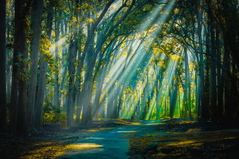 Road to home. Sunrays with Mist appearing. Backlight sunrays with mist appearing at Jim Corbett National Park royalty free stock images