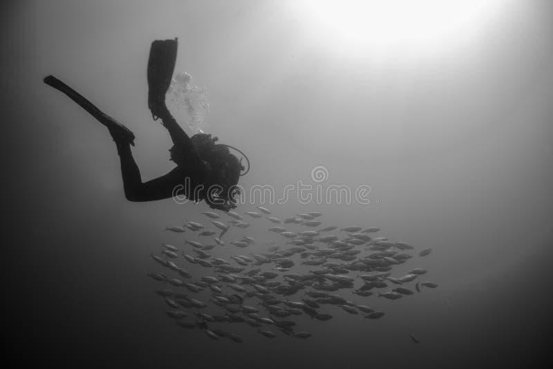 Backlighting dell'operatore subacqueo con un gruppo di pesce immagine stock libera da diritti