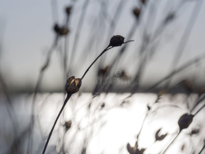 Backlighting Morning Glory stock photography