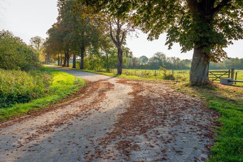 Backlightschot van een steen bedekte landweg in de voorgrond c royalty-vrije stock fotografie