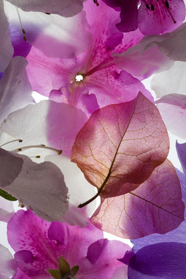 Backlit Achtergrond van Bloemen stock foto's
