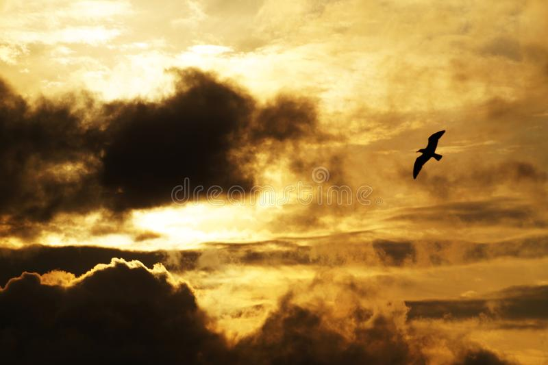 Backlit, Bird, Clouds royalty free stock images