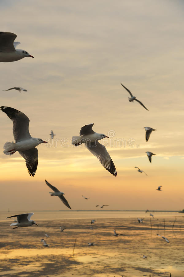 Free Backlit Birds Flying In The Evening Royalty Free Stock Image - 92543766