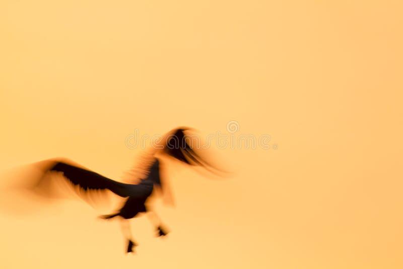 Backlit Brown pelikana żaluzi wolna prędkość zdjęcie stock
