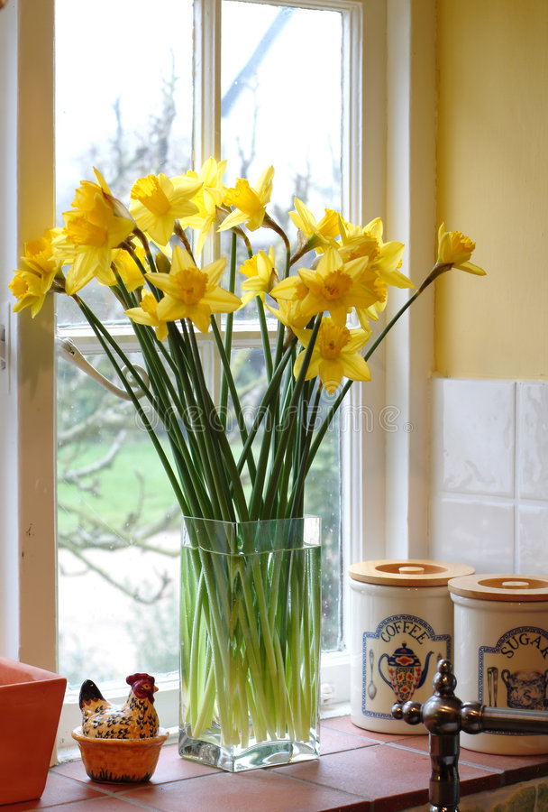 Backlit daffodils in a family kitchen stock images