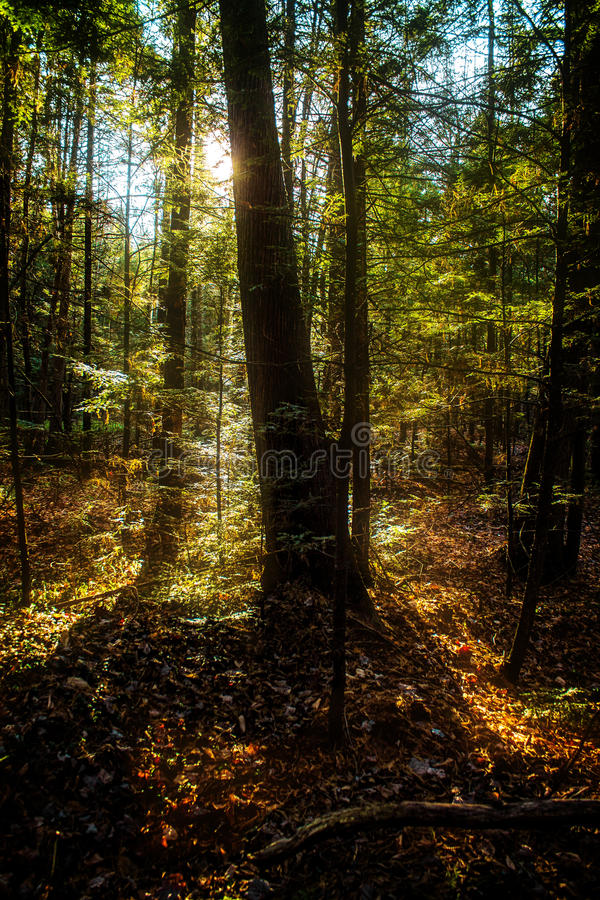 Backlit in the forest. stock image