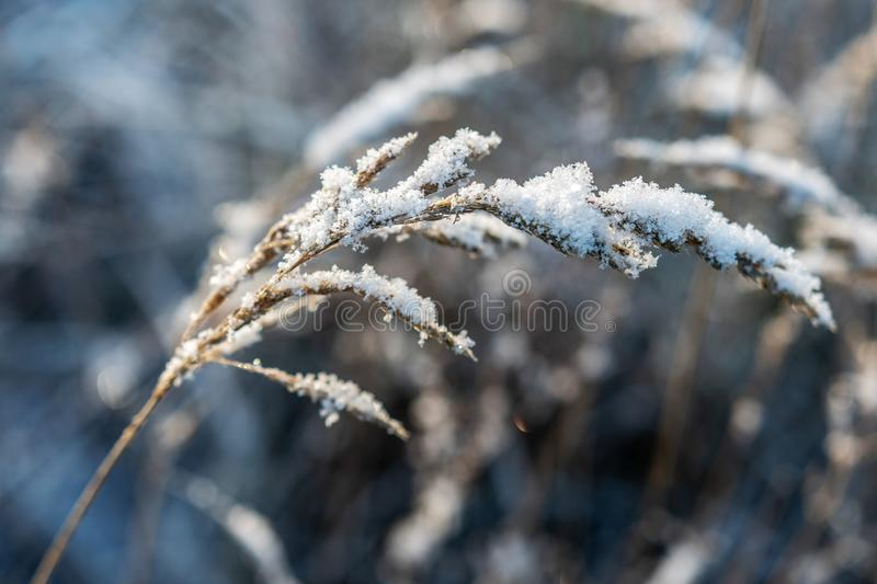 Backlit, frost covered grass on a cold and beautiful winter morning. royalty free stock photography