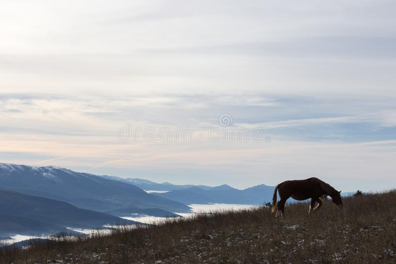 A backlit horse, eating grass, on top of a mountain, with some d stock photography