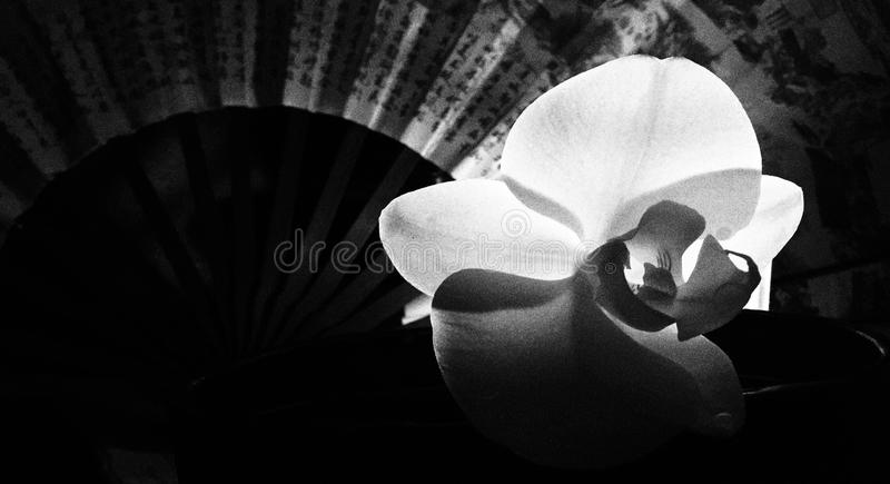 Backlit orchid with fan royalty free stock photos