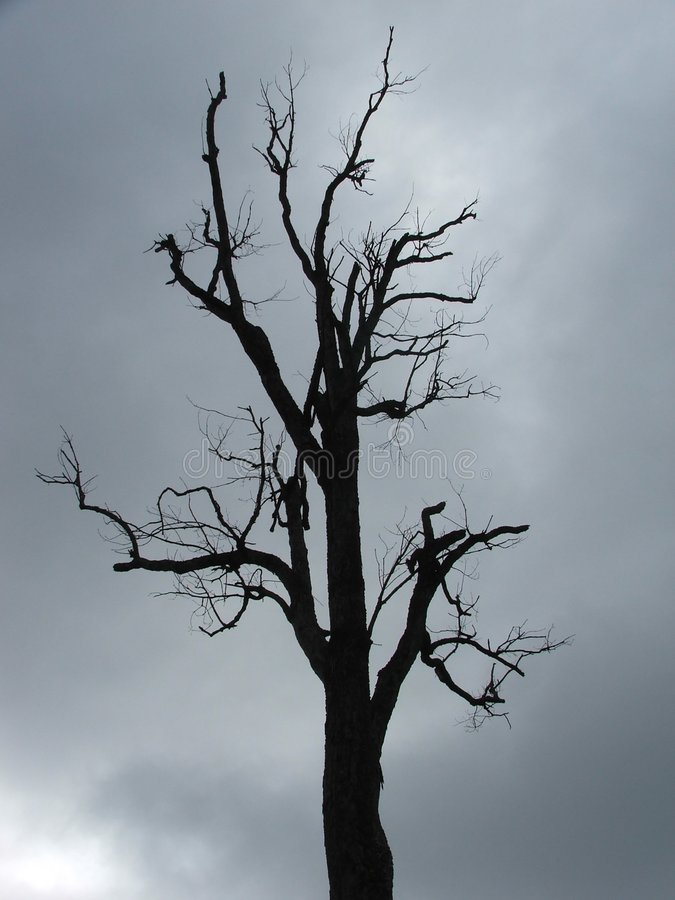 Download Backlit Silhouette Of Dead Tree Stock Photo - Image of nature, branch: 241846