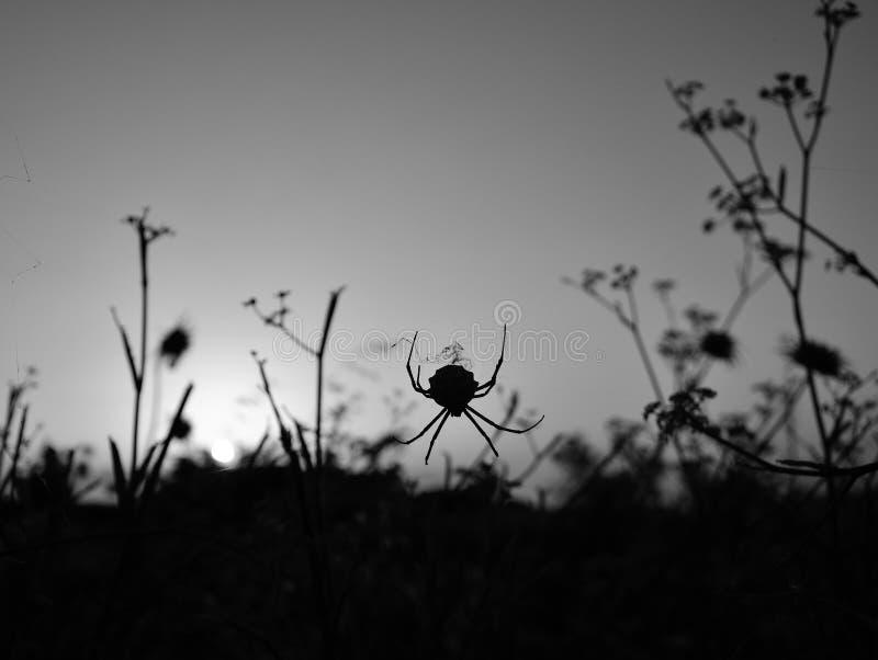 Backlit spin onder de grassen stock foto's