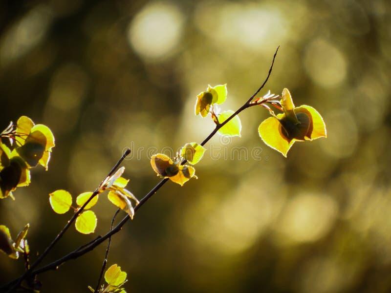 Backlit strzał Michigan flory z Bokeh obraz royalty free