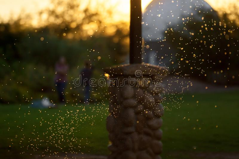 Backlit Swarm of Mosquitos or Gnats. A swarm of backlit mosquitos or gnats flying around under a picnic cabana at a park. The are at differing distances from the stock photography