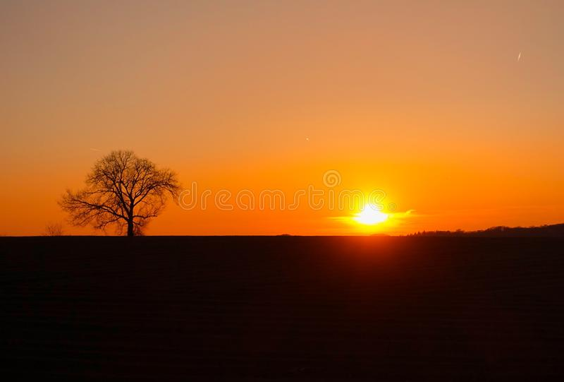 Backlit tree at sunset. Silhouette of a tree in orange peaceful sunset