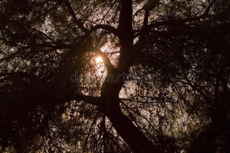 Backlit trees in the afternoon walk on the hill. Backlit trees in the afternoon walk on the fat hill belongs to Granada royalty free stock images