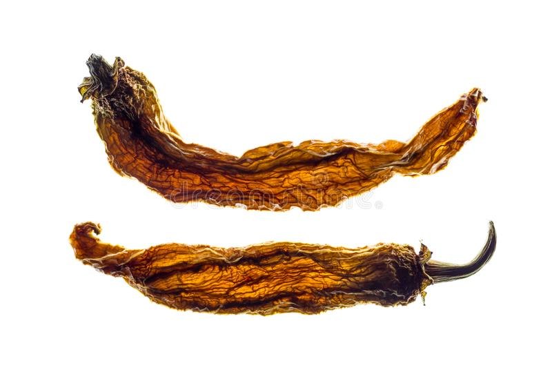 Backlit wysuszeni chili pieprze odizolowywający na białym tle zdjęcie royalty free
