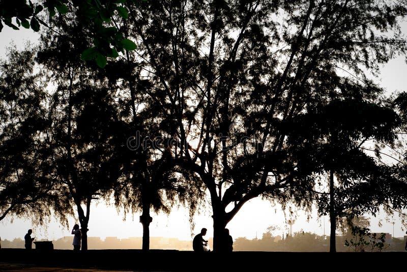 backlit zonsondergang royalty-vrije stock foto