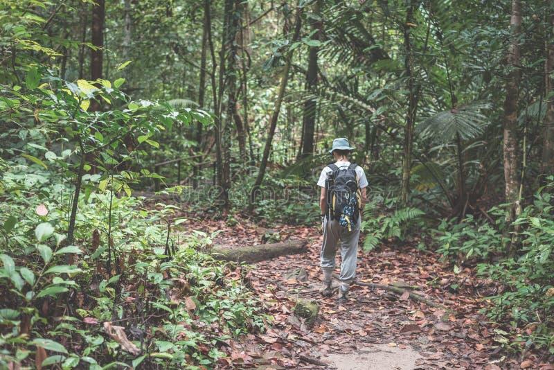 Backpacker bada majestatyczną dżunglę Kubah park narodowy, Zachodni Sarawak, Borneo, Malezja obraz stock