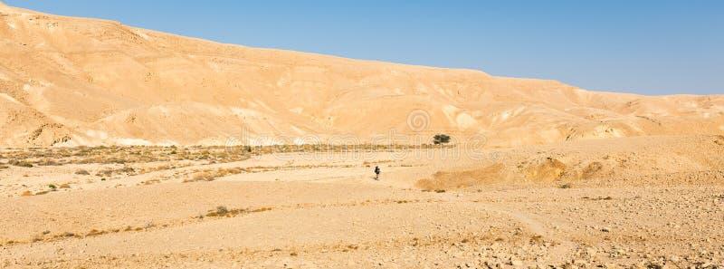 Backpacker guy walking hiking valley mountain desert trail panorama. royalty free stock photography