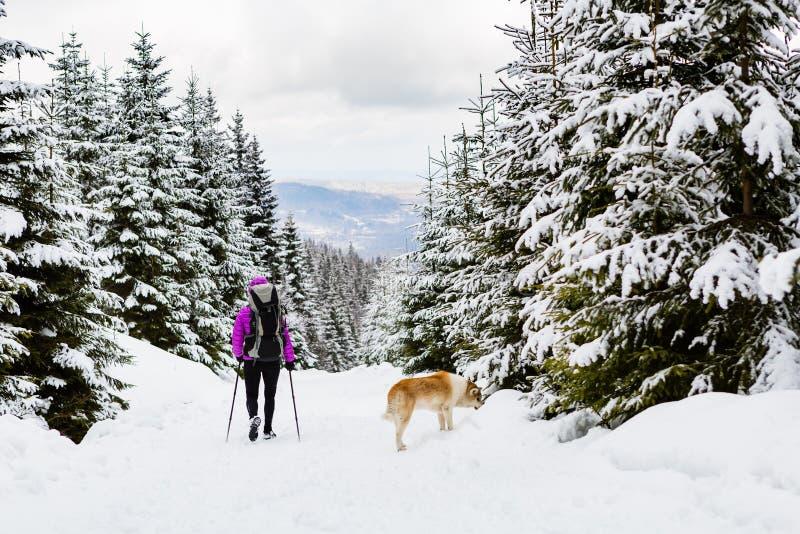 Backpacker wandeling die in de winterbos lopen met hond royalty-vrije stock afbeeldingen
