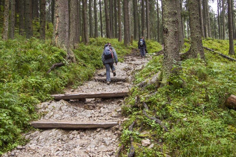 Download Backpacker Women On Mountain Path - Tatra, Poland. Stock Photo - Image: 30121436