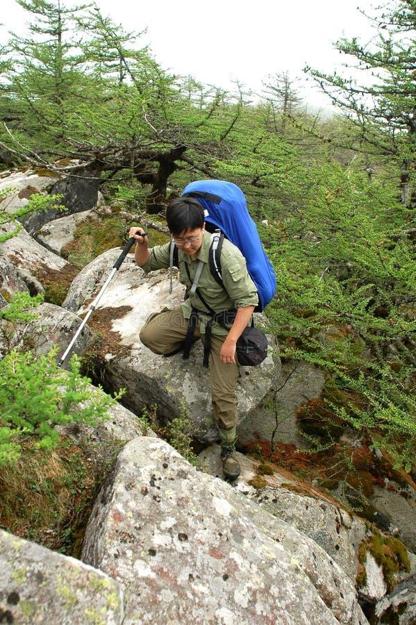 Download Backpacking stock image. Image of trekking, pine, blue - 14767945