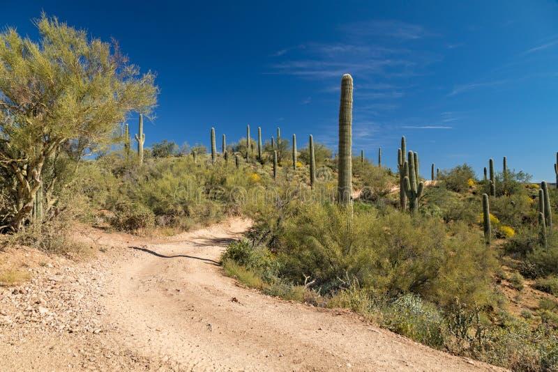 Backroad dans le désert de l'Arizona image stock
