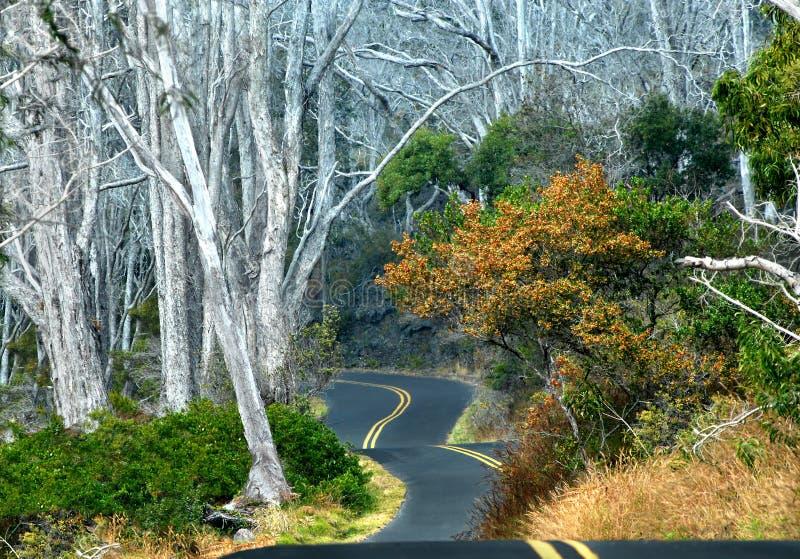 Backroad vers le haut de Mauna LOA images stock