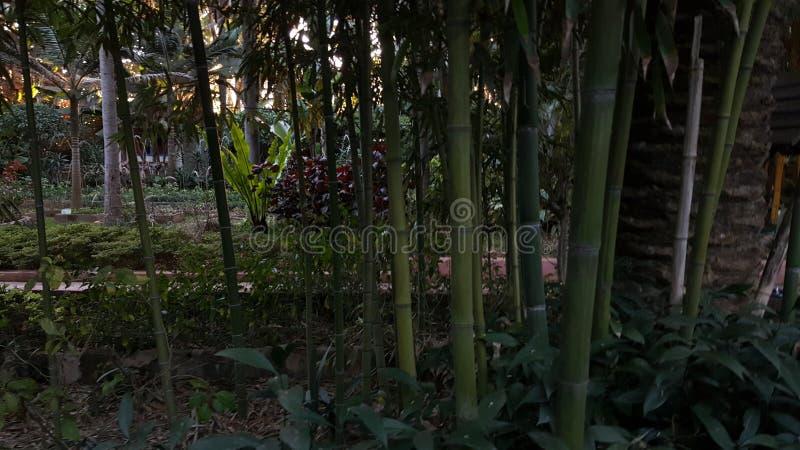 Backroud verde bonito fotos de stock royalty free